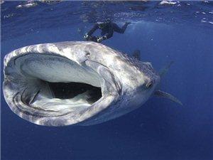 国际水下摄影赛呈现奇幻水世界