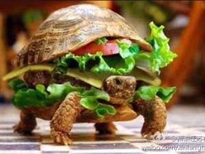 其实我真的是个汉堡,美味妥妥的!