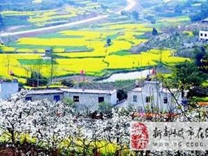 3.15周六�T彭州葛仙山看菜花、李花、梨花、�鸦ā⑻一�.百花���G!!!