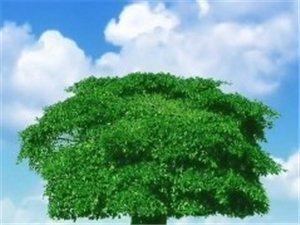 �m舍硅藻泥�e�O����h保法基本��策