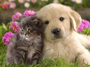 怎么判断猫和狗的年龄?