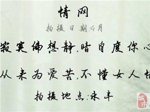 003情网-罗慧