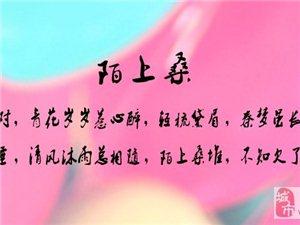 006陌上桑-张娇