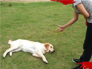 ��狗狗�b死