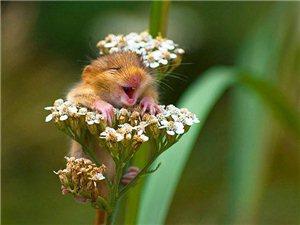 笑翻天的动物萌图