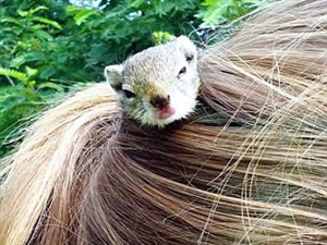 非洲女孩马尾辫里住了只松鼠