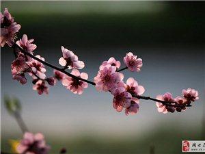 三月�春   第三部分