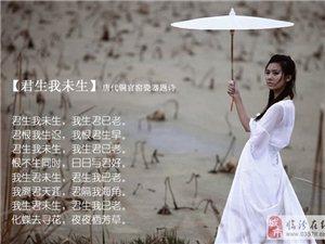 诗情画意5:【君生我未生】唐代铜官窑瓷器题诗