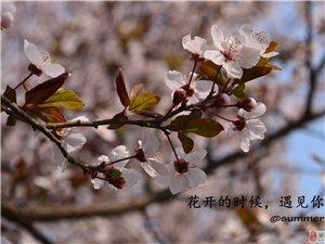 summer_花�_半夏第一季