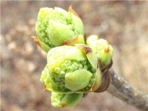 春(九龙山植物)