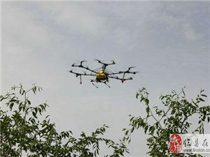 无人机来临县开阳村喷洒枣树