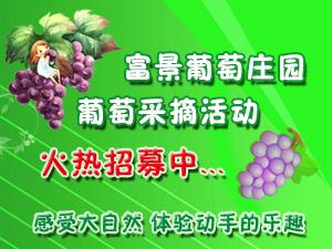 富景葡萄庄园葡萄采摘活动正在火热招募中!!!