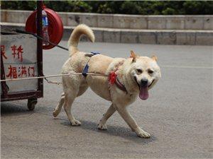 金沙网站奇闻:矮油!这狗吊炸天