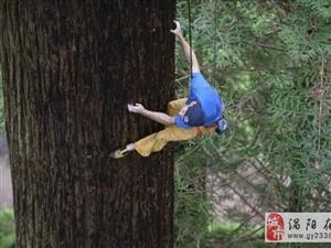 攀岩爬树样样行 Chris Sharma徒手攀爬77米高红杉树
