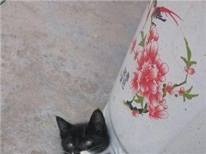 哈哈,,偷拍了一只小猫。。。