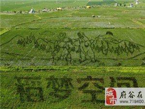 """巨幅""""3D稻田画""""亮相沈阳 总占地面积150亩"""
