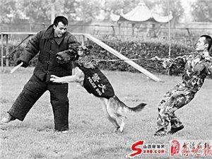 宠物训练、服从、表演科目、扑咬、拒食等科目的训练