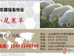 小尾寒羊多长时间可以下崽产仔