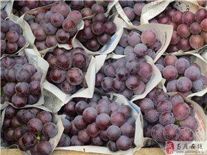 葡萄批发−−急
