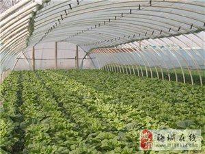 新旺兴农蔬菜大棚