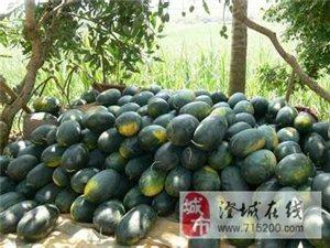 五畝大甜西瓜出售