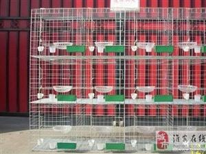 鸽笼 兔笼 专业生产销售!