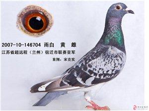 银钻娱乐中心出售成绩鸽