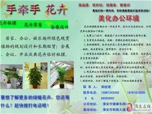 專業盆景租擺、水培植物、鮮花婚慶