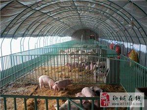 新旺兴农镀塑钢管养殖大棚