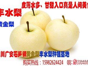欢迎个人到石笋镇购买——丰水梨——黄金梨我们是果园