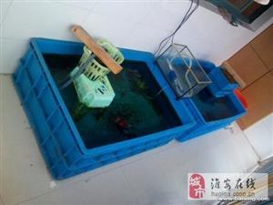 转让 巨龙水槽 养金鱼的利器