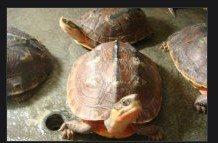 聚龟苑龟种苗直销中心