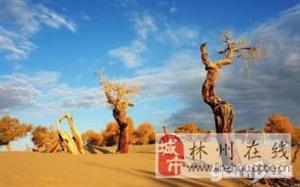 十一额济纳,越野车深入巴丹吉林,领略大漠胡杨风采