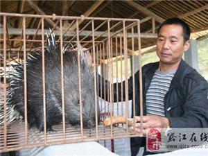 豪猪养殖户普遍存在的问题及对策