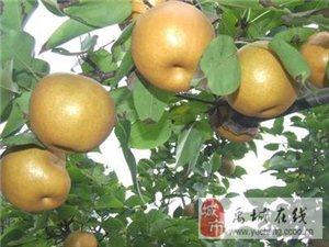 愛宕梨專賣,自產自銷