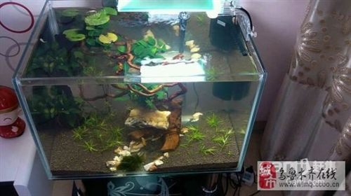 新出爐的生態魚缸便宜出售