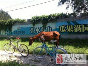 700元 公路变速自行车 26寸,6变速,99成新