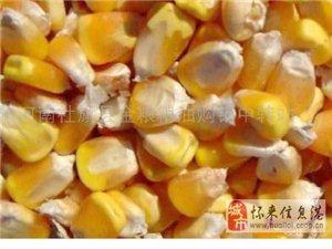 成�x采�玉米大��大豆小��夫皮豆粕