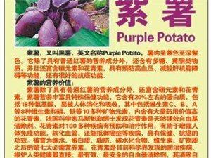 自己种的原生态紫(红)薯
