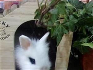 猫猫兔−−-耳垂不长的牯牛