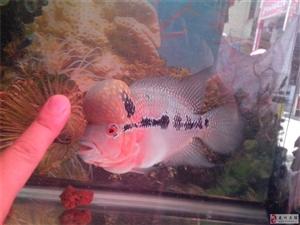 龙川首家海洋水族花艺馆欢迎您的光临!