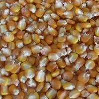 求�玉米大豆
