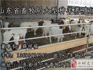 波爾山羊苗市場價格
