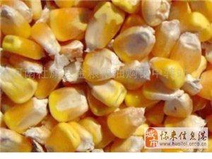 求購玉米大豆次粉