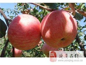 澳门拉斯维加斯网址八达岭,龙庆峡,百里画廊,苹果采摘园