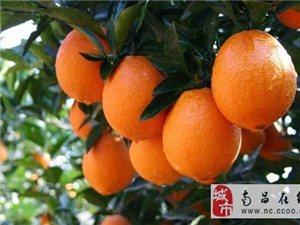 贛南臍橙供應