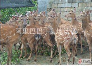 聯營養鹿,共創輝煌