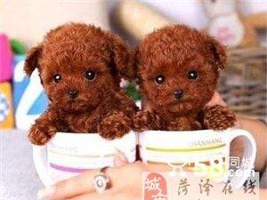 菏泽出售玩具体茶杯体高?#20998;?#27888;?#38386;?#23453;宝