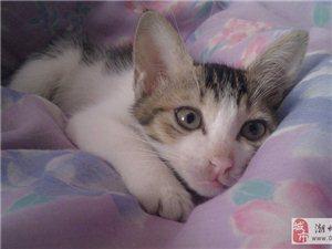 可爱小猫求收养