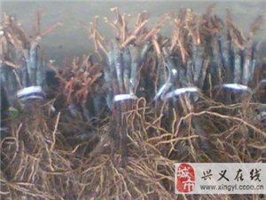 苗木價格優惠